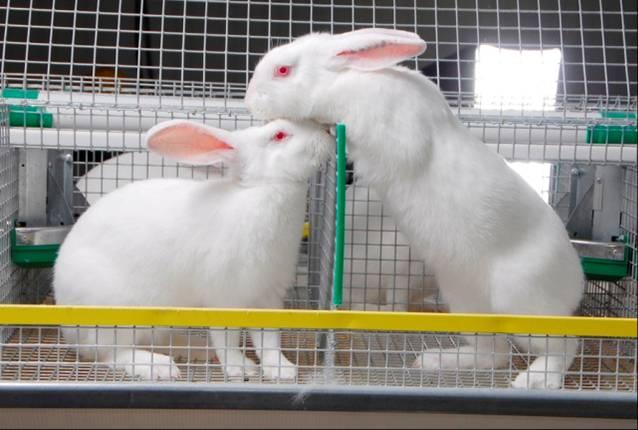 Рентабельность кролиководства в домашних условиях