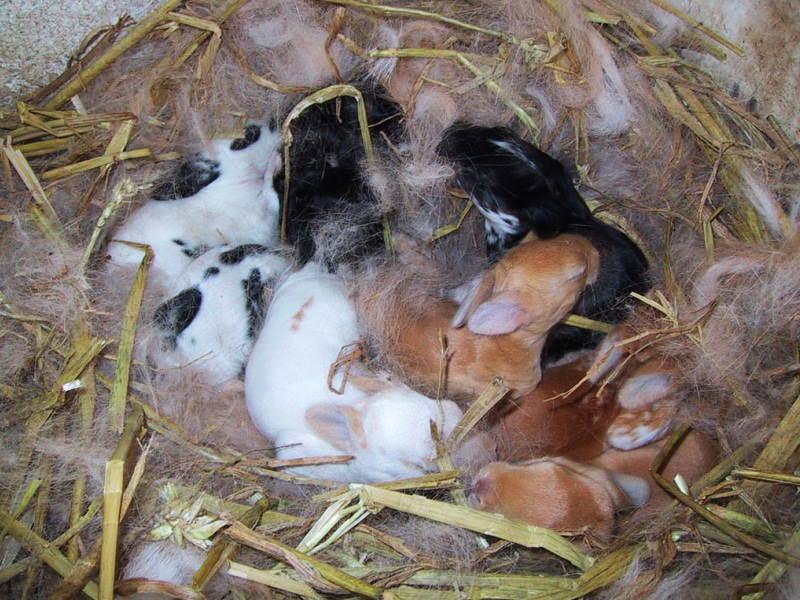 Почему умирают крольчата новорожденные