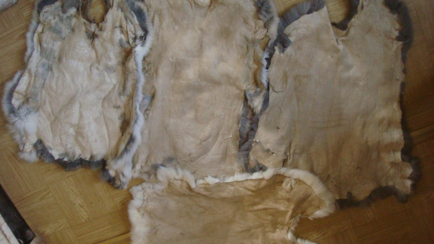 Выделать шкуру барана в домашних условиях
