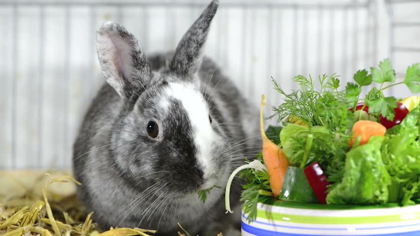 Декоративные кролики лечение стафилококка