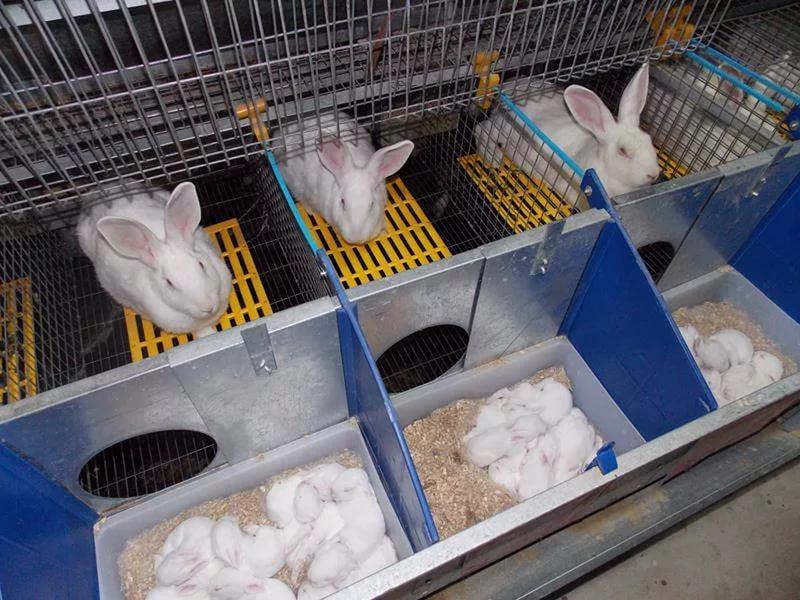 Ящик для кроликов