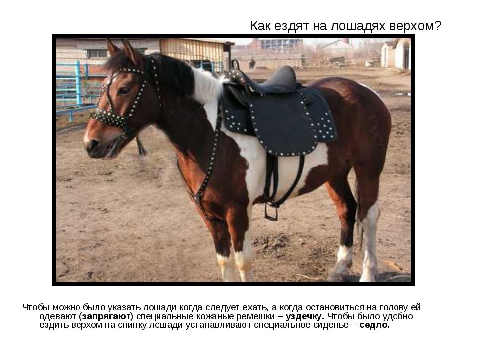 Значение сна кататься на лошади