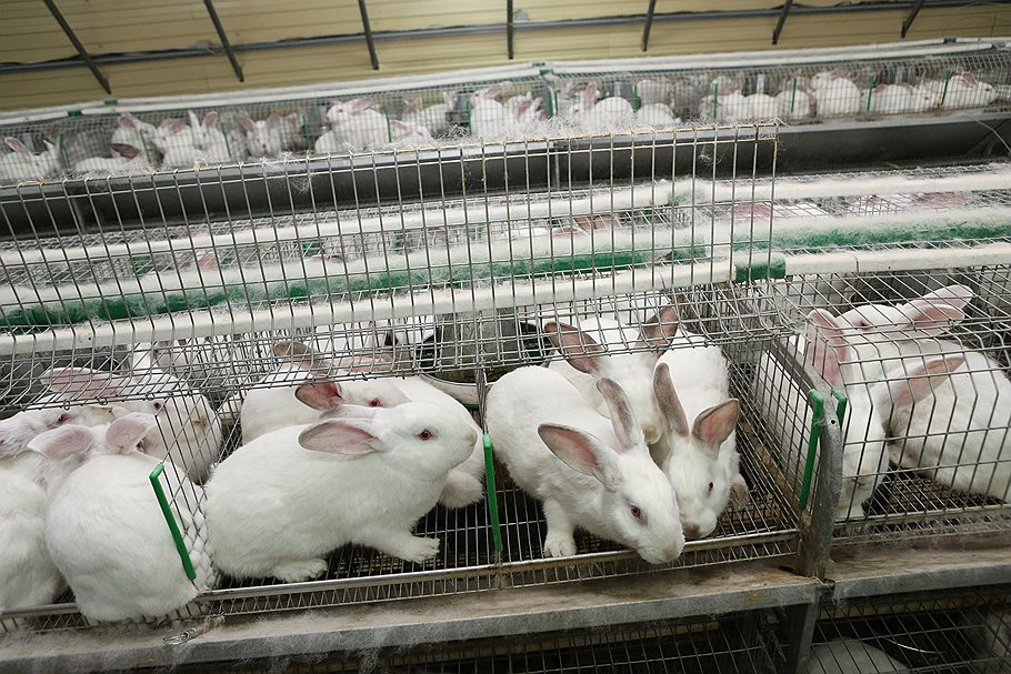 Бизнес выращивание кроликов 67