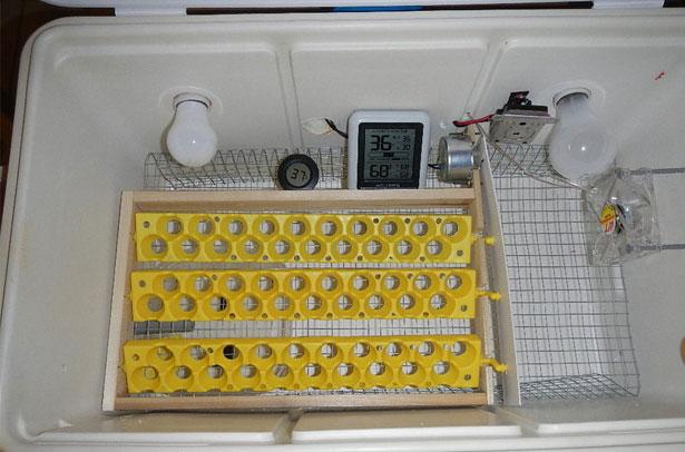 Инкубатор для перепелов