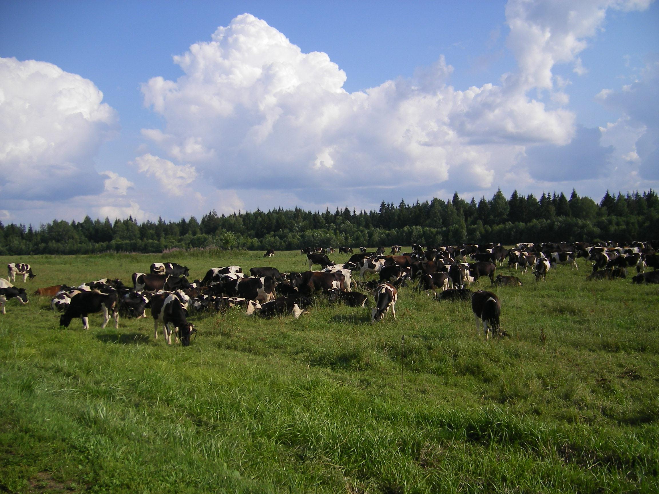 Значение животноводства в народном хозяйстве Народно хозяйственное значение животноводства в России