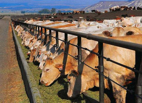 тем как построить бизнес на мелком животноводстве ноябрь разделе гороскопа