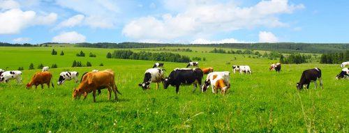 Как животноводство влияет на окружающую среду? Проблемы и решения