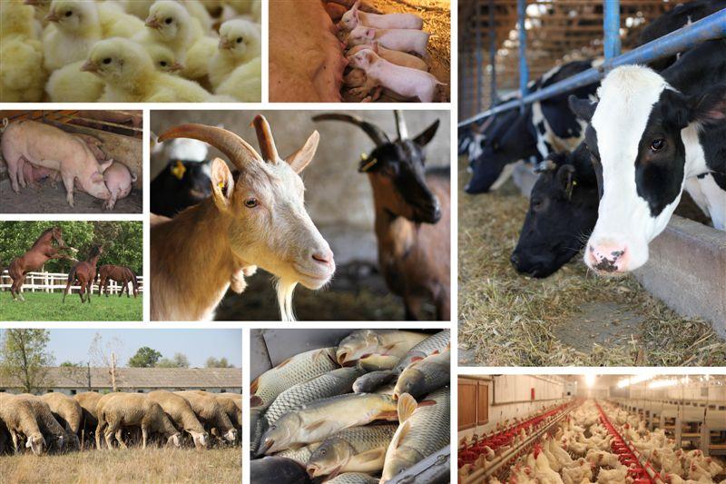 Животноводство в россии доклад 7976
