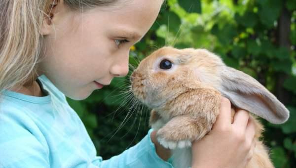 Голодный кролик атакует: почему кролики кусаются и дерутся?