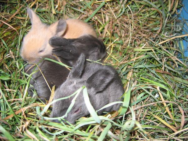 Сколько лет можно держать крольчиху для потомства?