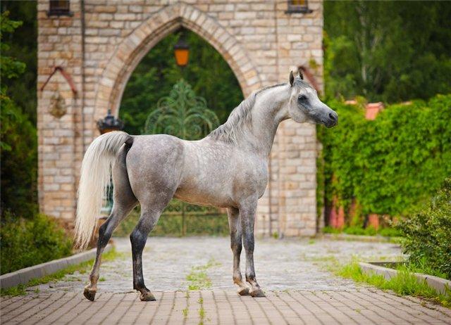 Список самых лучших лошадей мира