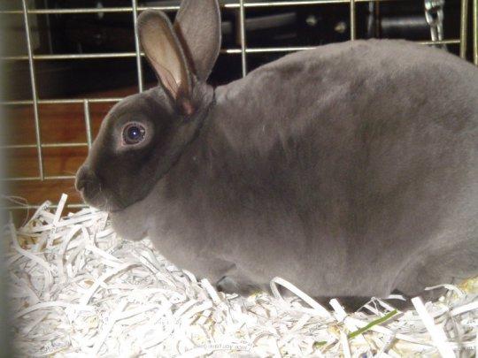 Что делать, если крольчиха не может разродиться?