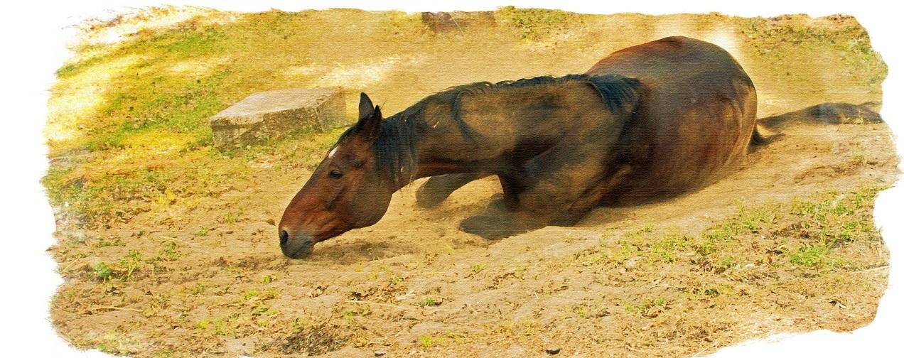 Картинки по запросу лошади