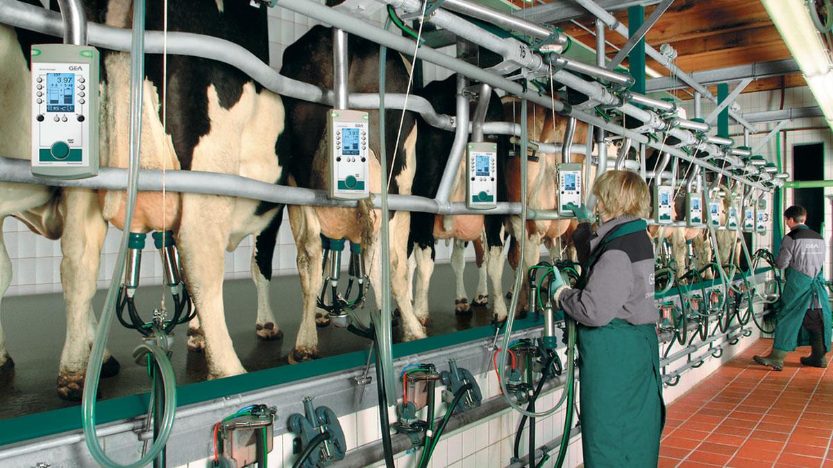 IT-решения для автоматизации животноводства