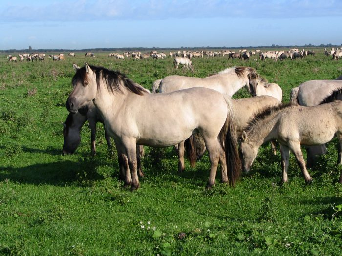 Как живут дикие лошади и их ареалы обитания