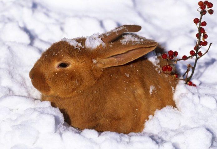 можно ли кроликов зимой держать на улице