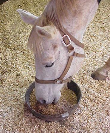 Лошади что едят?