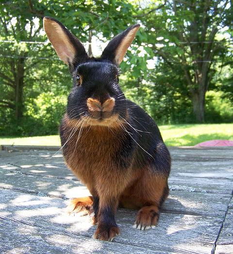 """Результат пошуку зображень за запитом """"кролики фото"""""""
