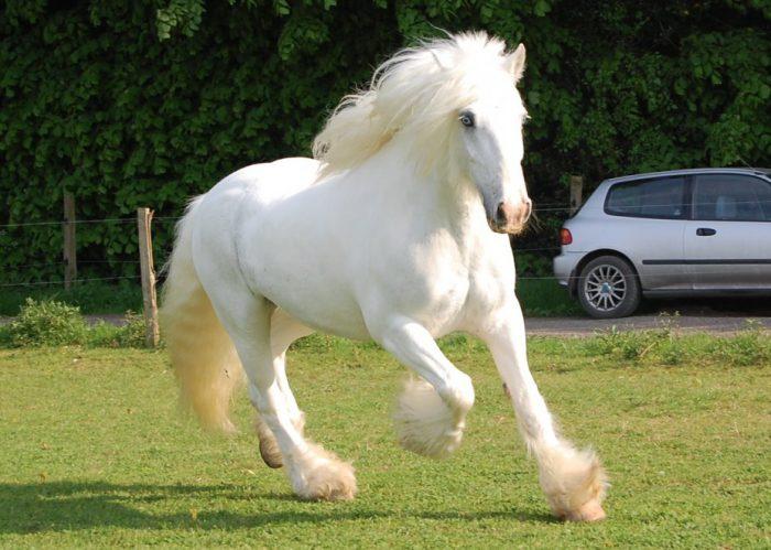 Существует ли белая лошадь?