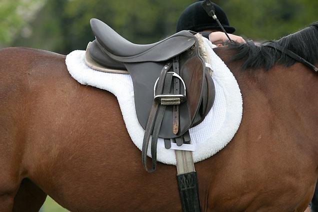 Как правильно оседлать лошадь?