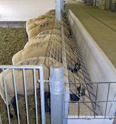 Кормушки для овец своими руками видео фото 456