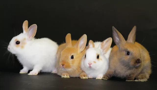 Почему у крольчихи случился выкидыш?