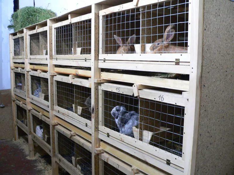 Клетки для содержания кроликов своими руками подробные чертежи и схемы фото 28