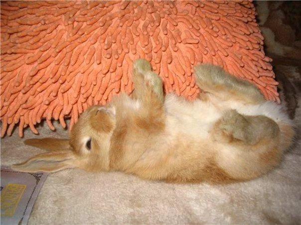 падеж кроликов без видимых причин