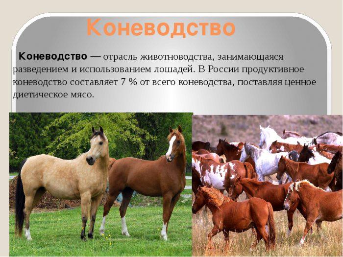 Как развито коневодство в России и мире?