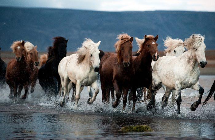 Табун лошадей - особенности и полезная информация