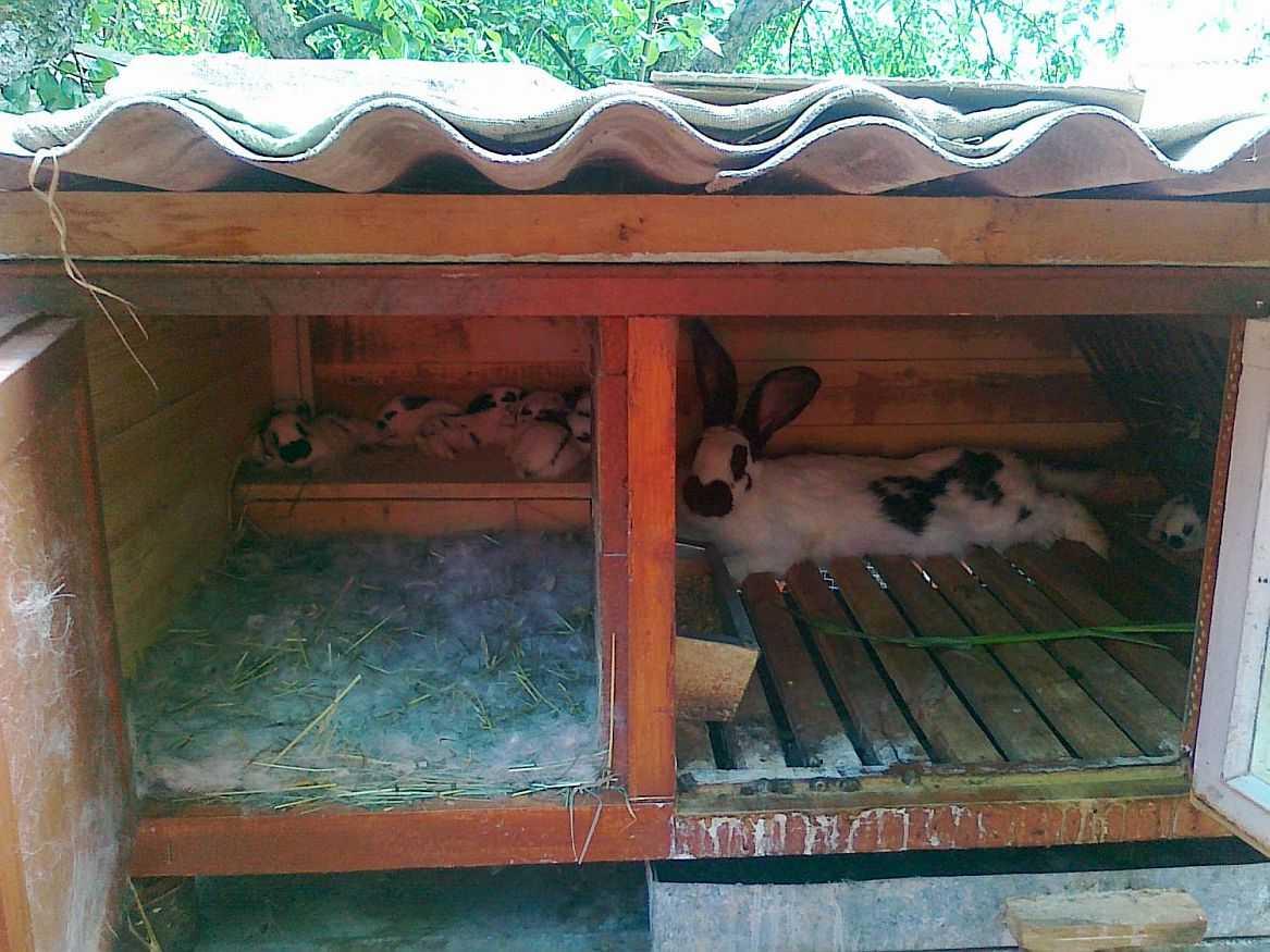 Маточники для кроликов своими руками видео 779