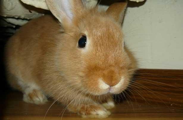 Почему кролики умирают без видимых причин?