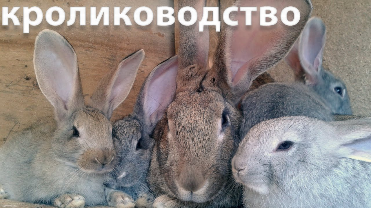 как сводить кроликов первый раз