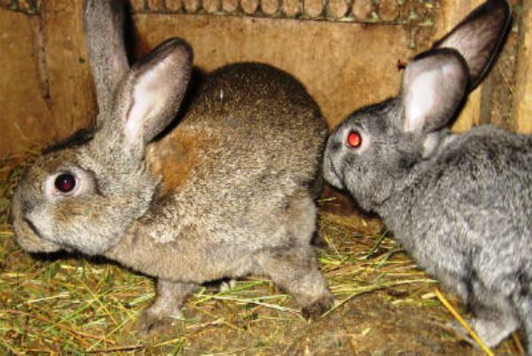 когда крольчихи начинают гулять