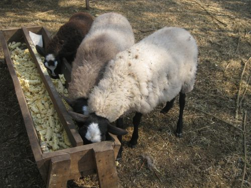 Варианты кормушек для овец