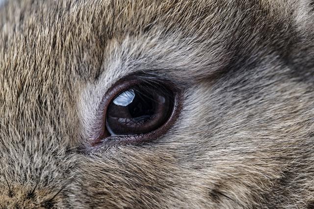 Распространённые болезни глаз у кроликов