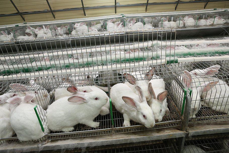 Бизнес план кролиководства с нуля бизнес план бумажная упаковка