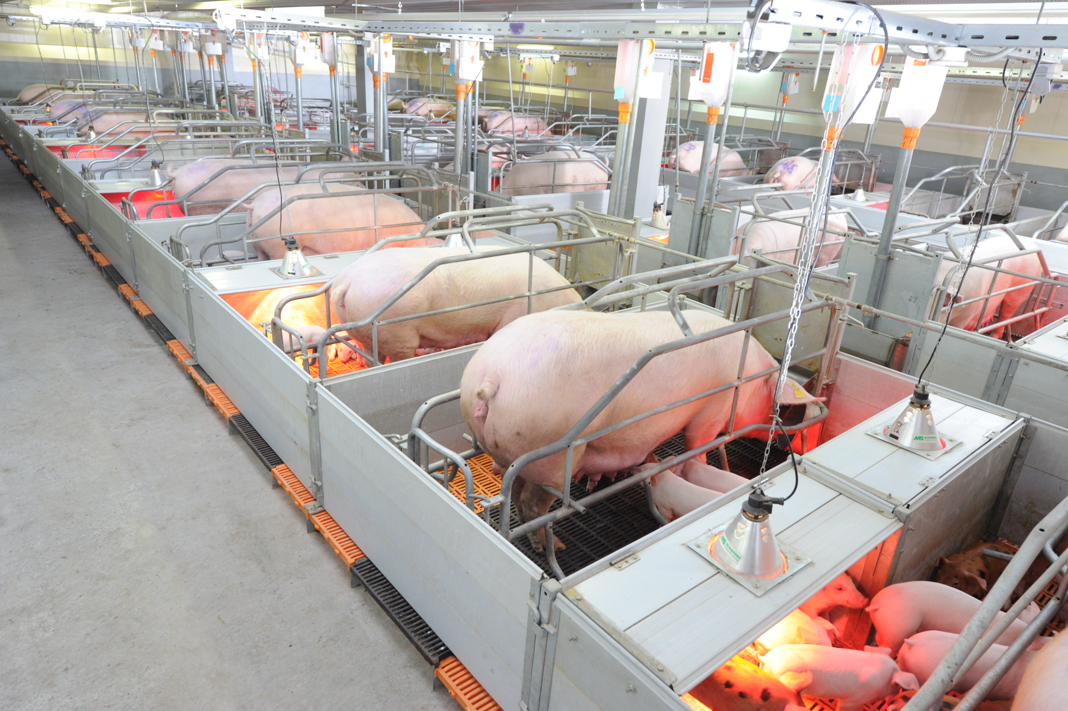 meat and milk factories