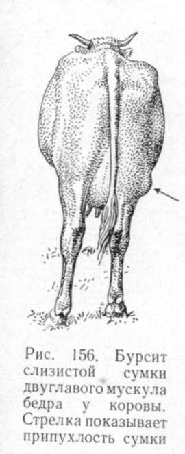 Лучение суставов у коров таблетки для образования жидкости в суставах