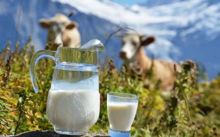 Сколько времени нужно кипятить молоко из-под коровы?