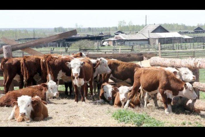 Особенности белоголовых бычков