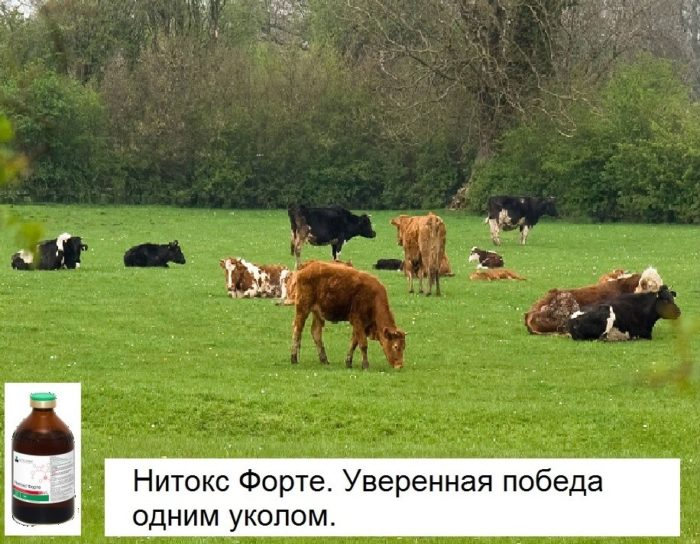 Нитокс для коров