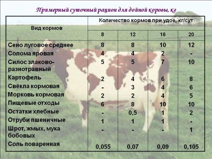 Кормление дойных коров