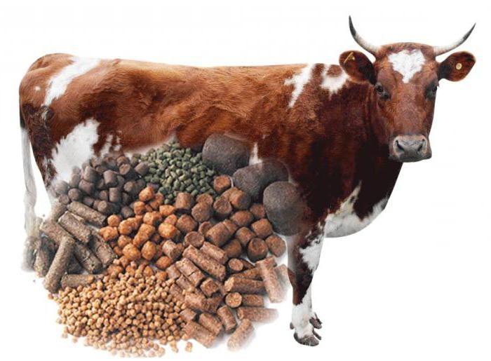Виды добавок для коров