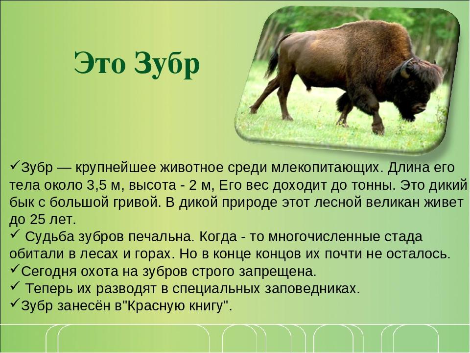 Краткое описание животных в картинках