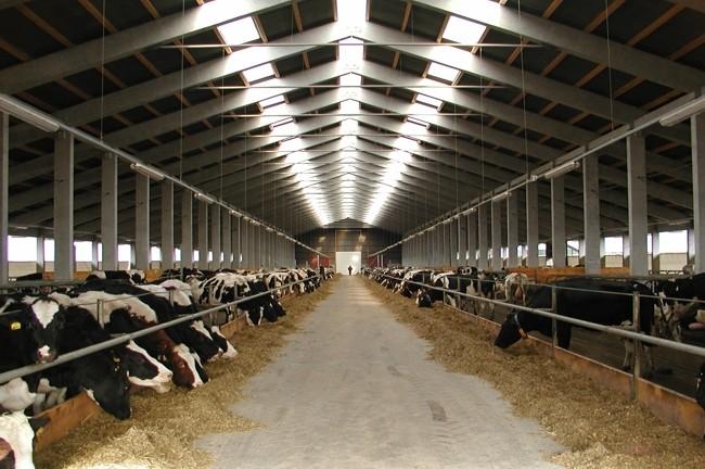 Коровник транспортер сельское хозяйство элеватор