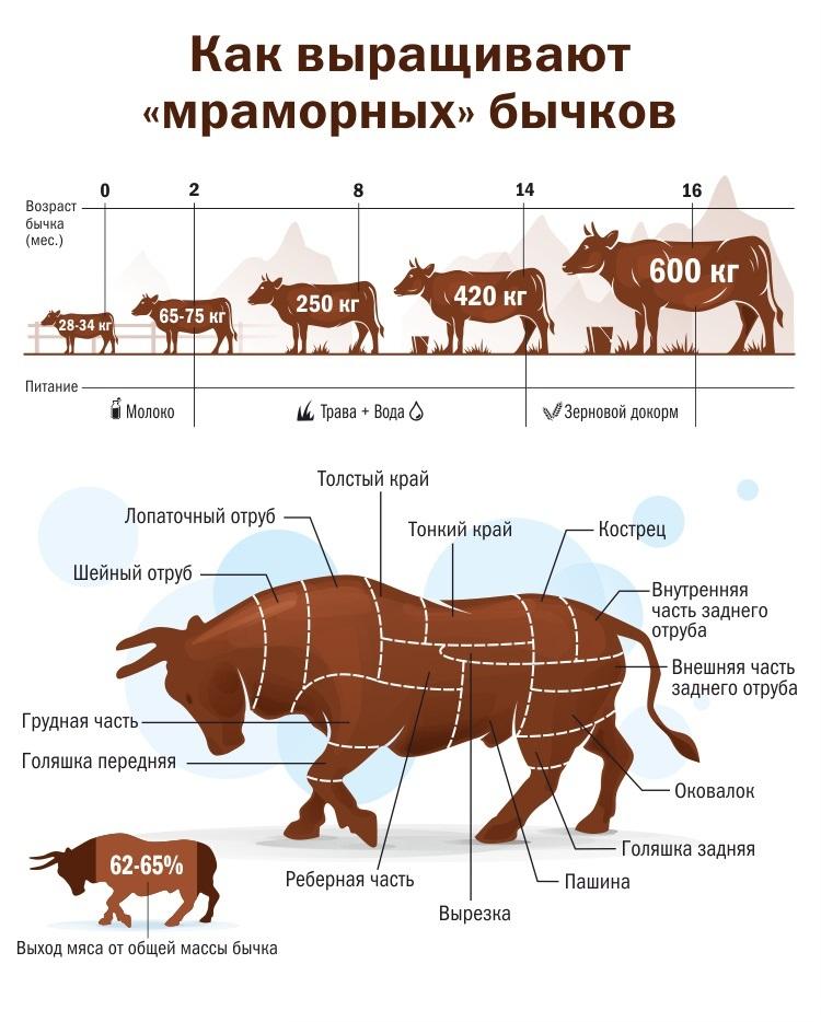 породы мраморных бычков