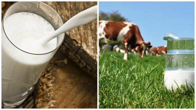 Что нужно предпринять, если корова не даёт молоко?