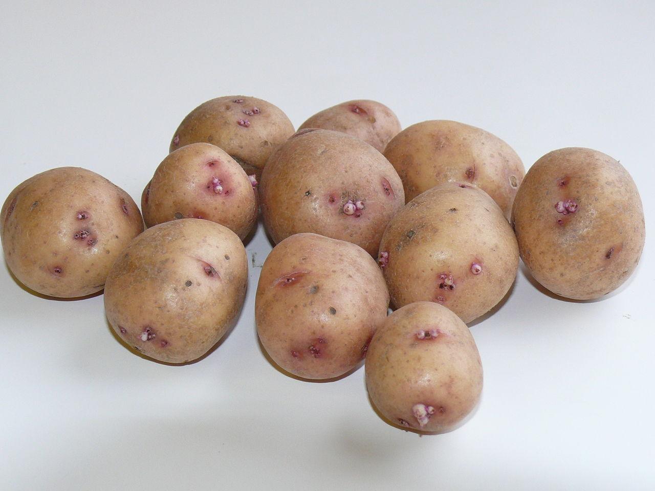 первый начал картошка повинь фото награды достались